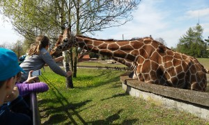 wroclaw zoo 2