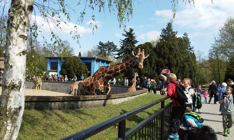 wroclaw-zoo-1